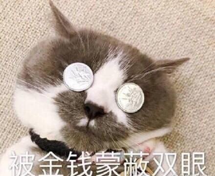 被双眼蒙蔽了金钱的猫咪表情微在你老婆哪信表情包图片