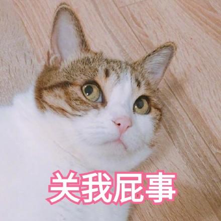 可爱猫咪文字斗图