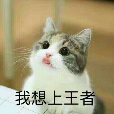 该表情包的主角是一只可爱的猫猫.
