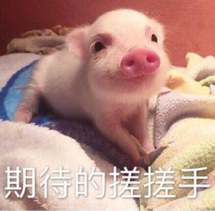 笑出猪叫大全可爱宝宝图片表情啦大全包表情睡觉图片图片