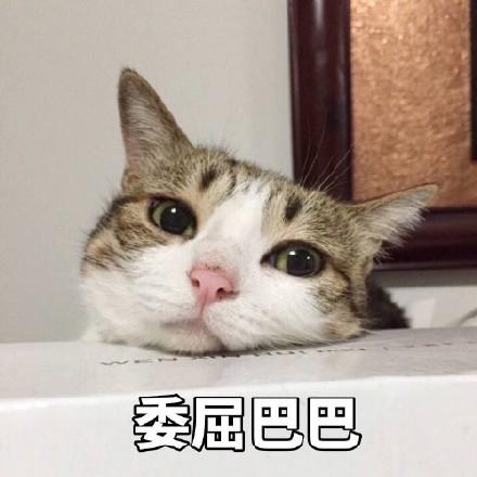猫咪受委屈的可爱图片