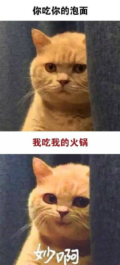 妙啊橘猫表情包全套无水印图片