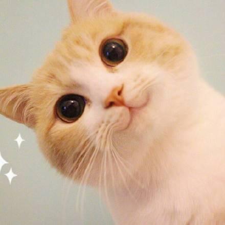 Bobi小萌猫手机样子表情搞笑图片全套的玩图片