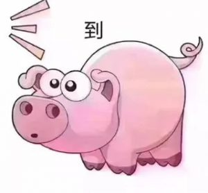 抖音猪到七彩猪表情包图片图片