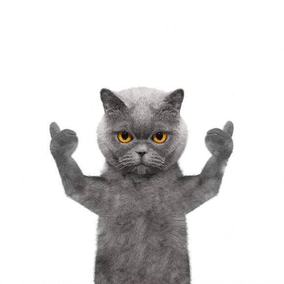 抖音英短蓝猫背景图片