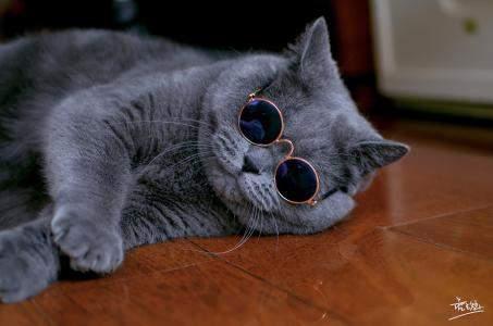 抖音猫图片表情包手机版图片