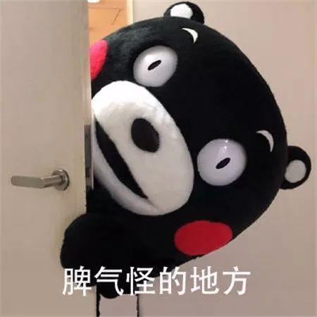 抖音熊本熊表情包图片